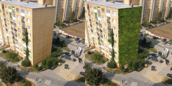 Vertikálna zeleň